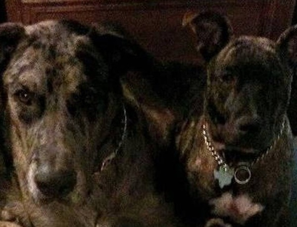 Wise County Missing Dogs_6443353432310435479