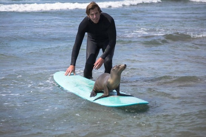 sea lion_5204481309798253865