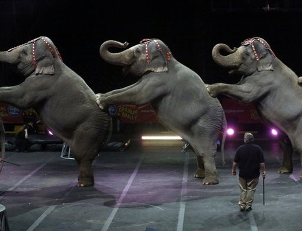 Elephants _-702725069326563572