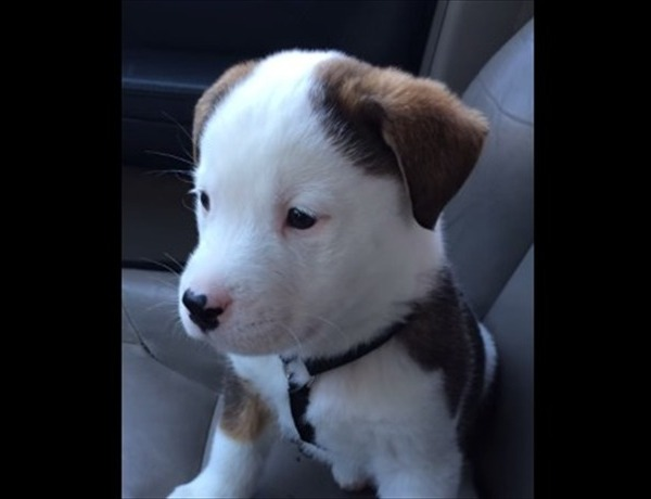 Today- puppy _-1944183780728552044