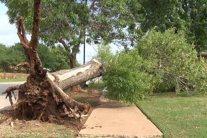 Tree Uprooted on McNiel Avenue_8654549036343774634