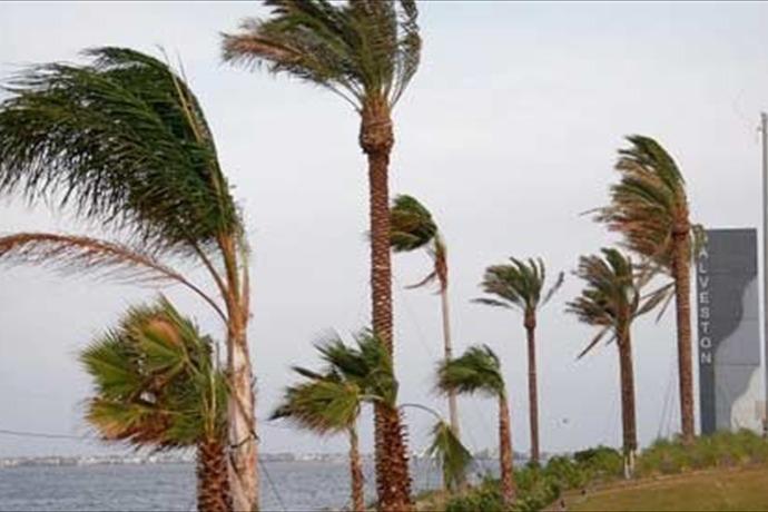 Galveston Palm Trees_-1136281830941504778