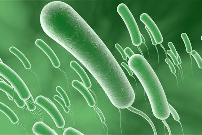 bacteria in lakes_9151331925855652316