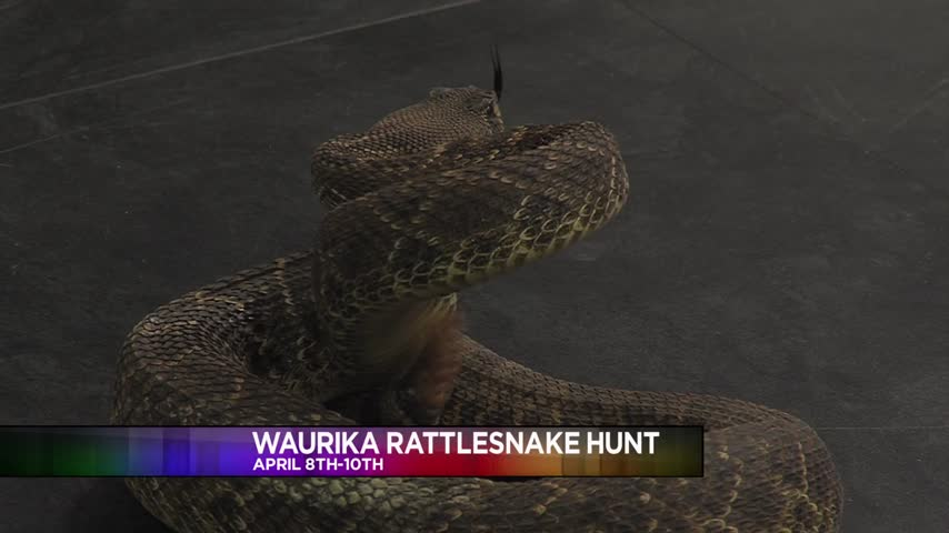Waurika Rattlesnake Hunt Interview 3-24-16_20160324175401