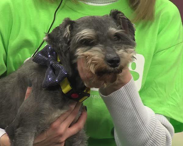 Wichita County Humane Society 3-18-16_20160318173903