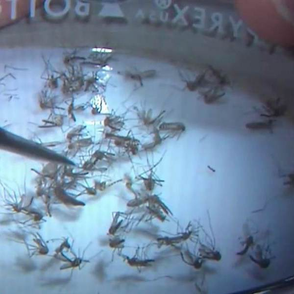 Zika_1470262248482.jpg