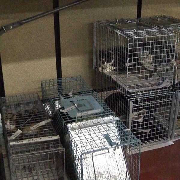 cats_1473798885779.jpg