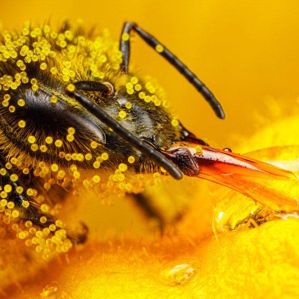 Pollen002