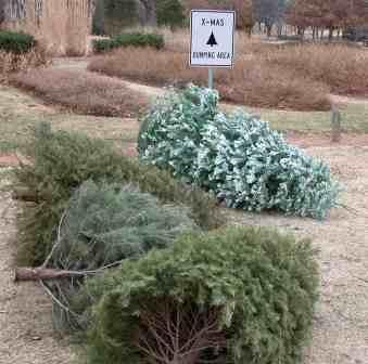 Christmas Tree Drops 007A_1482794582927.jpg