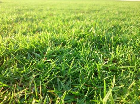 Grasses 002_1497889159191.jpg