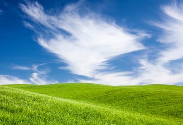 GRASS 005_1496750961119.jpg
