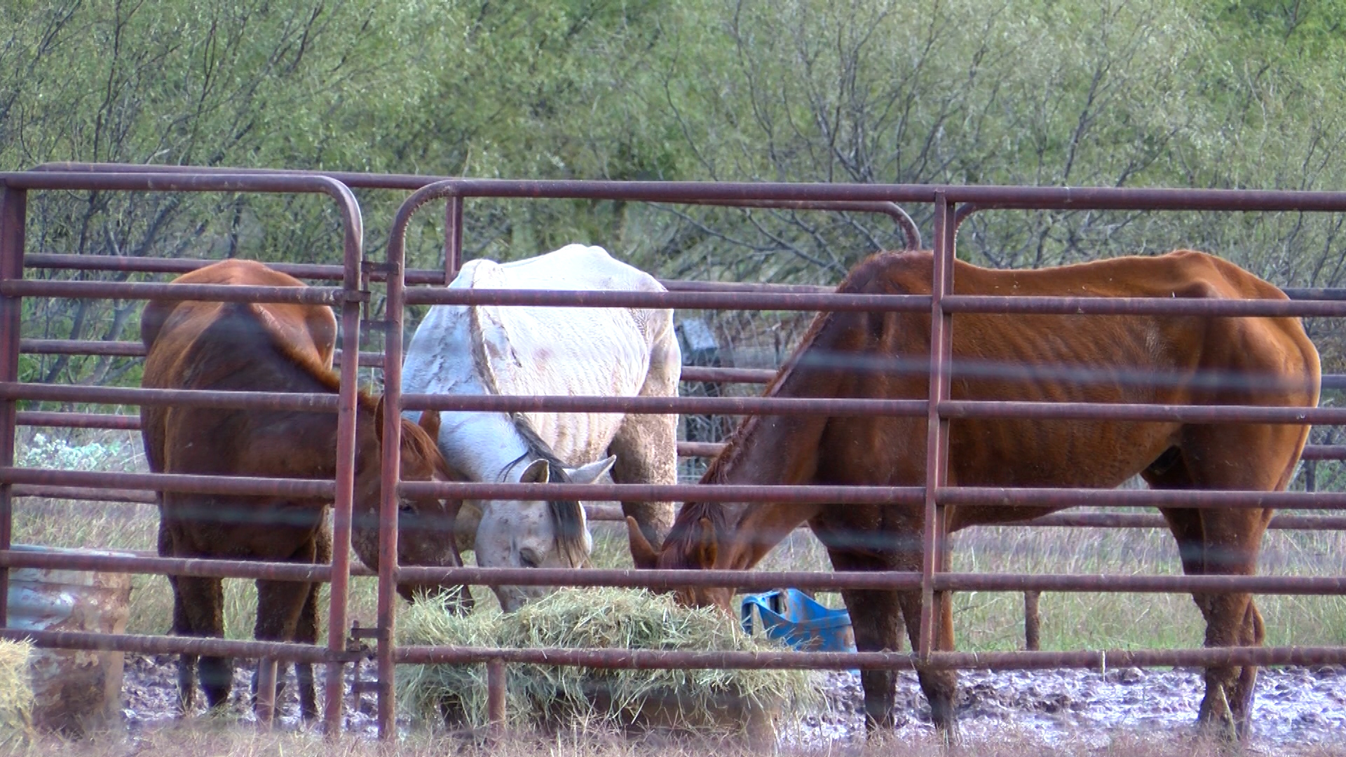 No Charges Anticipated For Alleged Animal Neglect Incident