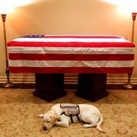 George_HW_Bush_Service_Dog_13561-159532.jpg88415909