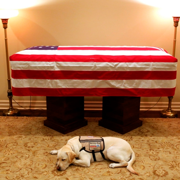 George_HW_Bush_Service_Dog_13561-159532.jpg88415909
