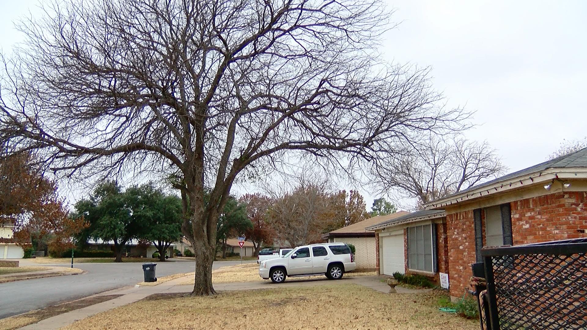 TREE DAMAGE_1544743693399.jpg.jpg