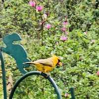cardinal 4_1553010660276.jpg-842137442.jpg