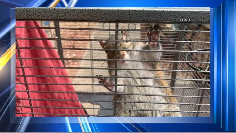 Squirrel locked up