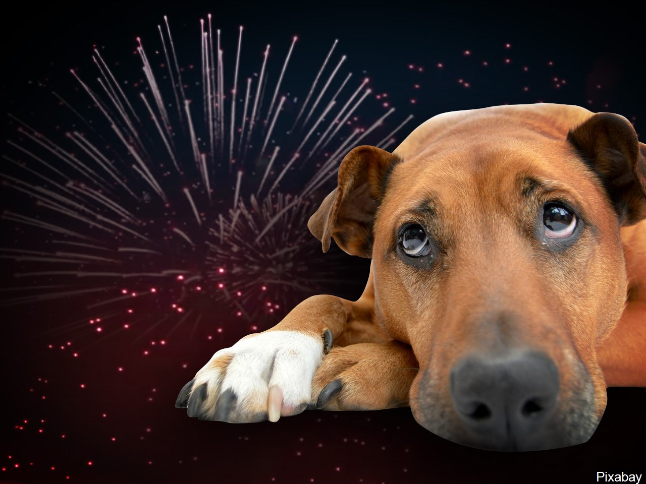 When the fireworks begin going off around the fourth of July each year, it's not only firefighters who may have to put in extra hours.