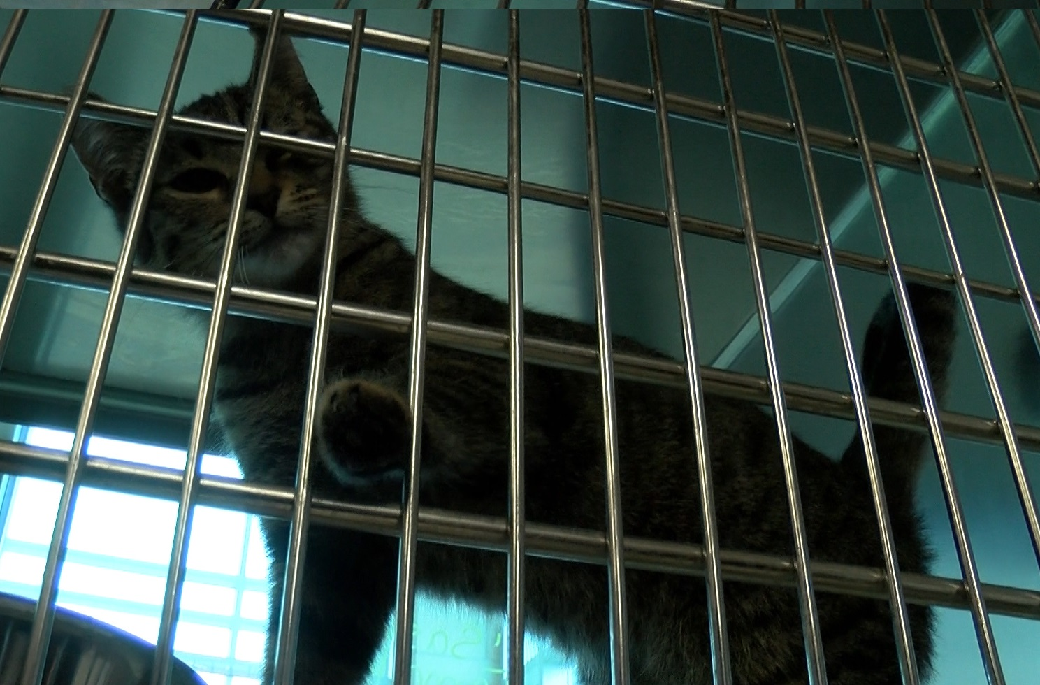 Texomans are gearing up for the largest pet adoption event in the country.