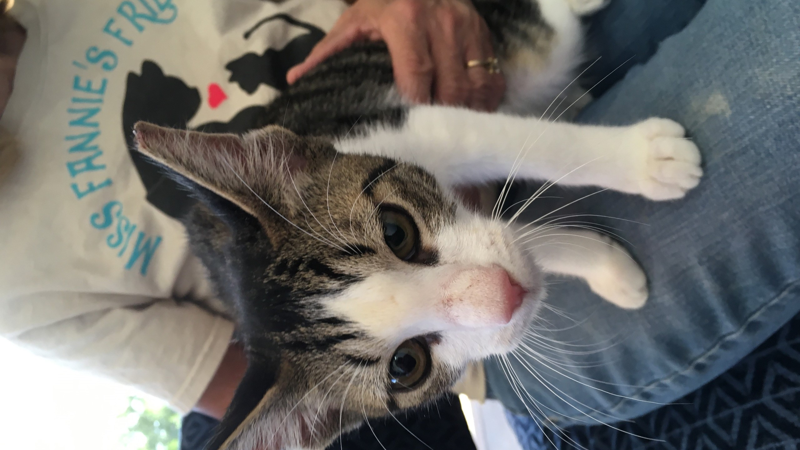 Clear the Shelters   Texomashomepage com