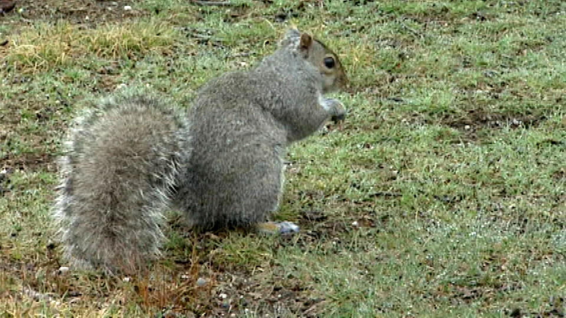 1-eyed squirrel with Instagram account is returned to nature
