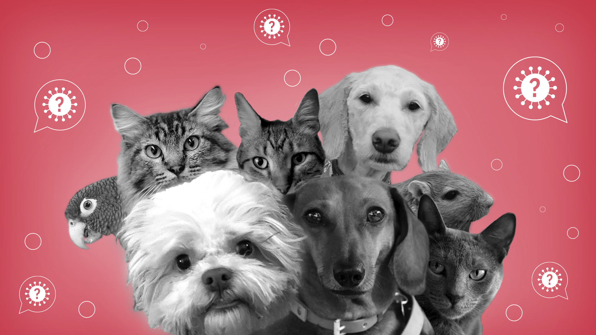 VIRUS OUTBREAK VIRAL QUESTIONS PETS
